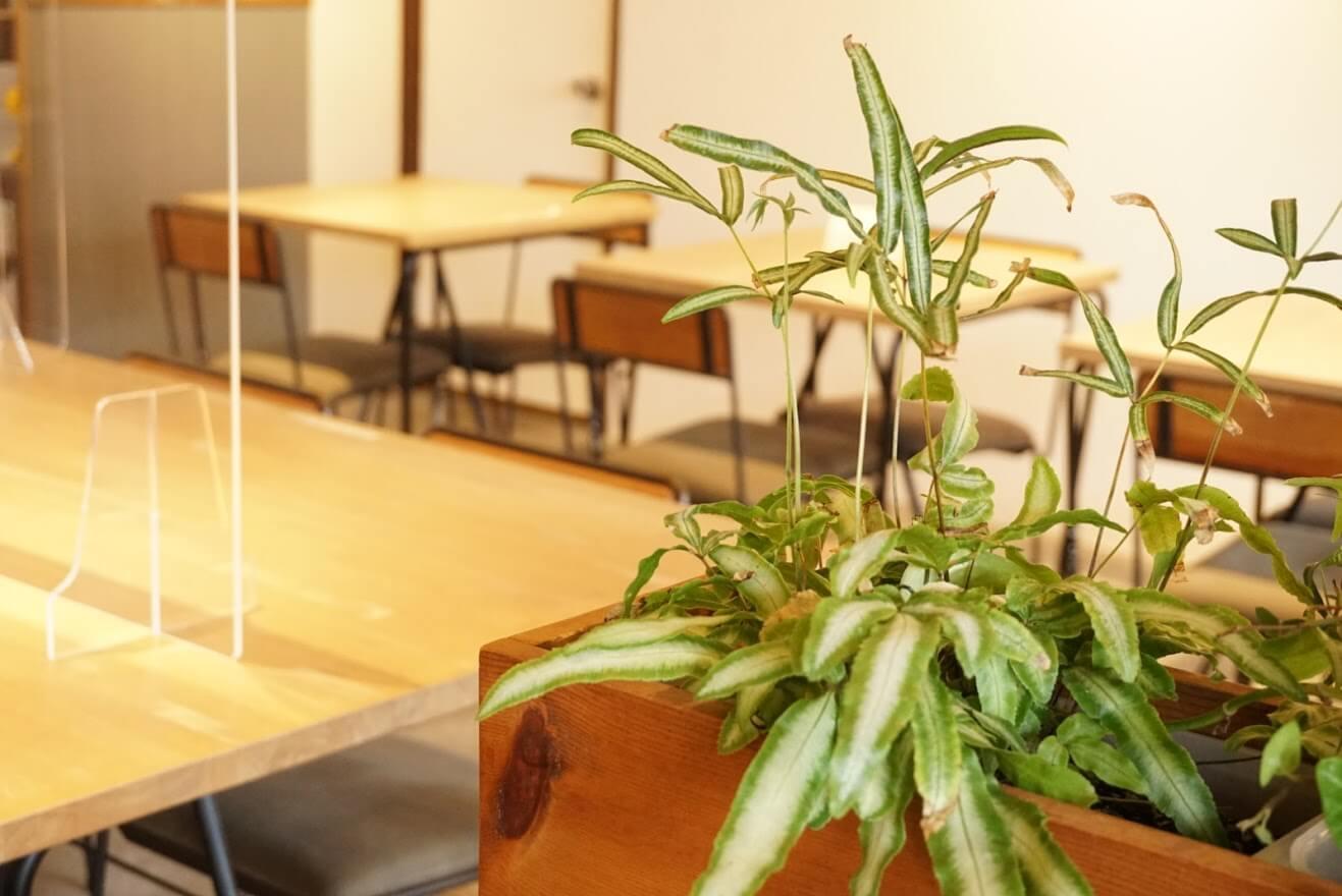 カフェこさじの観葉植物